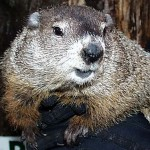Punxsutawney Phil is a distraction.