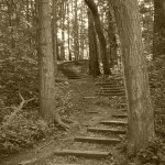 The path is narrow, but it's the only way - beautiful stairway that's part of a life-changing story