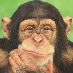 Chimpanzees have better interpersonal skills than many in the First World.
